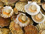 Mỹ: Chưa miễn thuế cho sò điệp nhập khẩu từ Trung Quốc