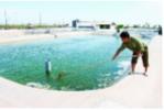 Hỏi - Đáp Thủy sản tháng 8 (P. 4)