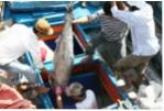 Phú Yên: Tích cực hỗ trợ ngư dân vươn khơi bám biển
