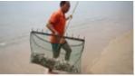 Cầu gai cát dày đặc bãi biển Nha Trang