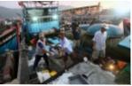 Hội Nghề cá Quảng Nam: Chia sẻ khó khăn cùng hội viên