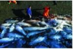 Cuộc chiến chống IUU và gian lận thủy sản tại Mỹ