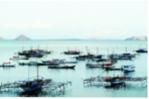 Indonesia đẩy mạnh tiêu thụ thủy sản nội địa