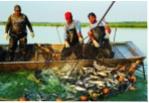 Cá tra Việt Nam - Đối mặt thách thức mới