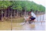 Hiệu quả nuôi thủy sản dưới tán rừng phòng hộ