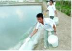 Quy chuẩn sản phẩm xử lý môi trường nuôi thủy sản