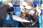 Thủy sản Việt Nam: Đã đến lúc vào chuỗi cung ứng toàn cầu