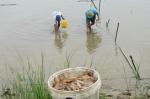 Nan giải bảo hiểm cho thủy sản