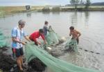 Thanh Hóa tập trung phát triển thủy sản