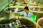 Cần thiết xây dựng trung tâm sản xuất tôm giống tại tỉnh