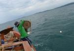 Kiên Giang: Câu bạch tuộc trên đảo ngọc Phú Quốc