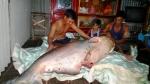 Người dân bắt được cá tra dầu nặng 135 kg