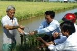 Vĩnh Long: Nhân rộng mô hình nuôi cá trong ruộng lúa