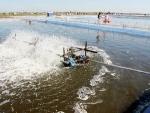 Khánh Hòa: Bền vững nhờ nuôi tôm kết hợp cá đối mục