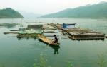 Tuyên Quang: Phấn đấu đạt 12.234 ha tổng diện tích nuôi thủy sản