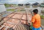 Tiền Giang: Thấp thỏm giá cá điêu hồng