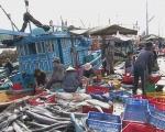 Ninh Hòa (Khánh Hòa): Sản lượng thủy sản khai thác đạt 3.322 tấn