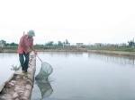 Ðông Minh (Thái Bình): Quyết liệt không để tôm bệnh bùng phát thành dịch
