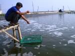Xuất hiện các ổ dịch bệnh trên tôm ở Quảng Ngãi