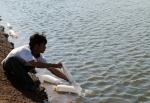 Bình Thuận: Sản xuất tôm giống và nuôi thương phẩm gặp bất lợi