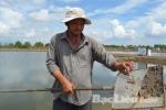 Bạc Liêu: Thời tiết bất lợi gây thiệt hại cho tôm nuôi