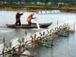 Bình Định: 32 ha diện tích tôm nuôi bị dịch bệnh