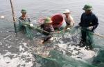 Quảng Ninh: Tăng cường phòng dịch bệnh cho tôm nuôi