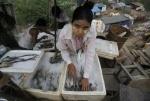 Myanmar: Nhập lậu tôm từ Bangladesh và Thái Lan tăng