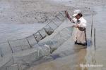 Cà Mau: Xây dựng chứng nhận quốc tế về nuôi tôm sinh thái