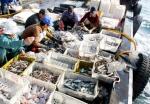 Hoàn thiện chính sách đầu tư dịch vụ hậu cần nghề cá tại miền Trung