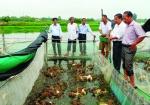 Vĩnh Phúc: Hiệu quả từ kết hợp cá trê và ếch trong lồng lưới