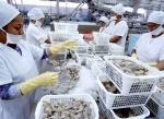 Trung Quốc dỡ bỏ lệnh cấm đối với 3 nhà xuất khẩu tôm Ecuador