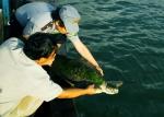 Tăng cường hoạt động bảo tồn các loài rùa nguy cấp
