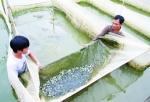 Hiệu quả nuôi cá giống mới