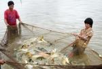 Nam Định: Phấn đấu sản lượng thủy sản đạt  134.000 tấn/năm