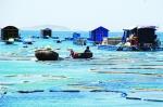 Phú Yên: Lại phát hiện nuôi tôm hùm trái phép