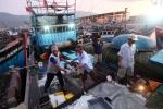 Quảng Trị: Khai thác thủy sản hiệu quả từ các chính sách hỗ trợ
