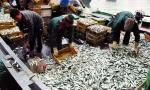 Gỡ vướng mắc chứng nhận thủy sản