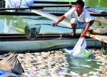 Đồng Nai: Quan ngại với ô nhiễm môi trường