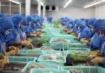 Nhìn lại thị trường xuất khẩu tôm Việt Nam