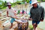5 vấn đề thủy sản 2015