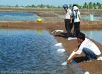 Bạc Liêu: Đông Hải xuống giống hơn 3.600 ha nuôi tôm