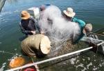 Quảng Trị: Đẩy mạnh đắnh bắt thủy sản gắn với bảo vệ môi trường biển, hải đảo
