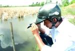 Ứng phó để giảm thiệt hại với thủy sản nuôi