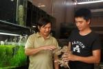 Làm giàu từ nghề nuôi cá cảnh ở miền quê gió Lào, cát trắng