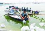 Kiên Giang: Thả nuôi 102.343 ha tôm nước lợ