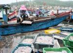 Quảng Bình: 7 tháng đầu năm, sản lượng thủy sản tăng khá
