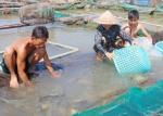 Bà Rịa - Vũng Tàu: Thực hiện 9 mô hình thủy sản trong năm 2017