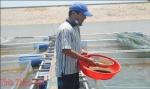 Thừa Thiên Huế: Bảo vệ thủy sản mùa nắng nóng