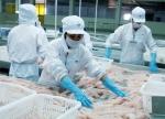 Để liên kết nuôi cá tra ở Sao Mai hiệu quả